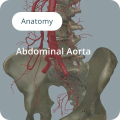 Anatomy of the Abdominal Aorta composited visual for surgical training