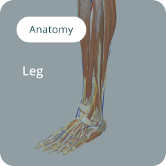 Anatomy of the leg composited visual for surgical training
